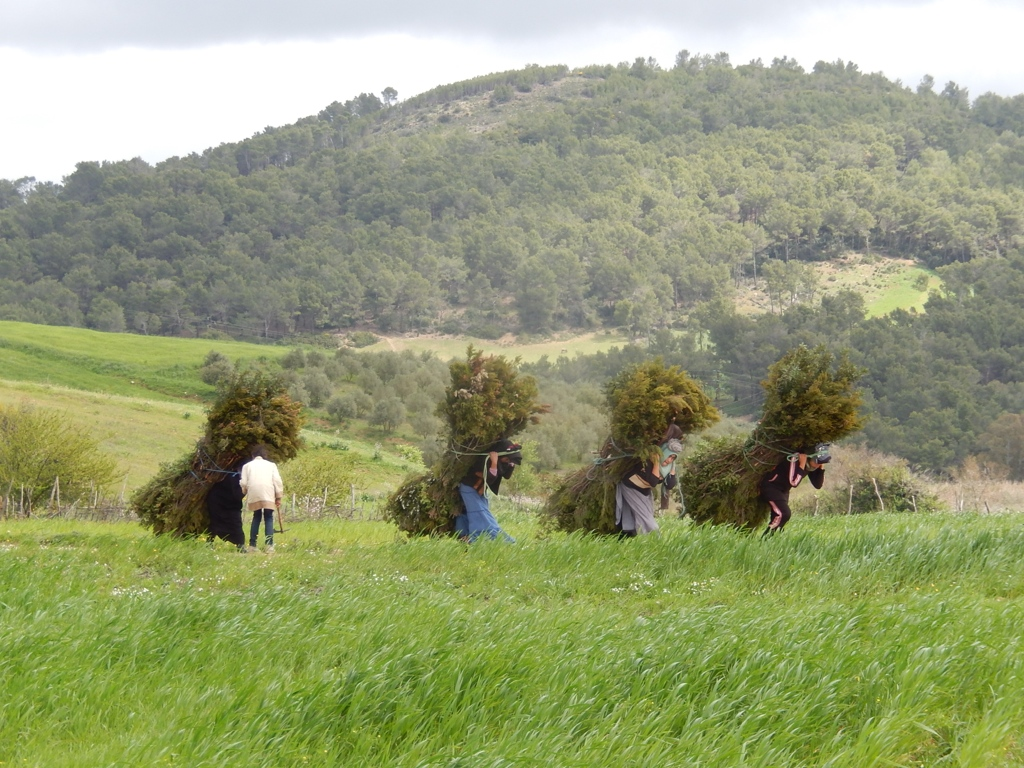 Finding firewood in deforested agricultural areas. (Tunisia)