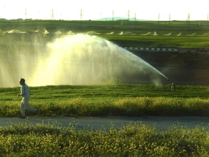 Rare sight of irrigated wheat. Vast majority of wheat production is rainfed in the Mediterranen Area. (Algeria)