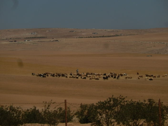 It is almost impossible to retain stubble in arid Meditteranean environments. (Jordan)