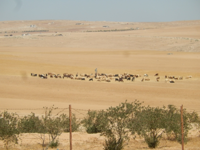 Whatever green available must be protected from livestock (foreground). (Jordan)