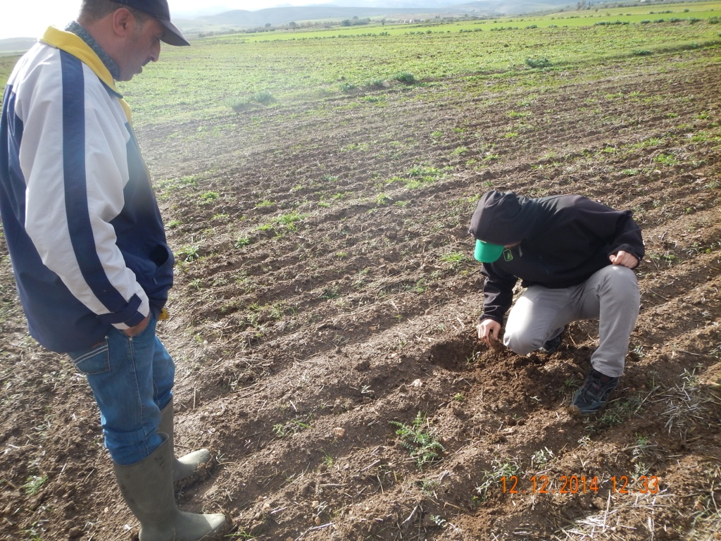 Investigating the crop establishment where the soil cover is suboptimal for CA. (Tunisia)