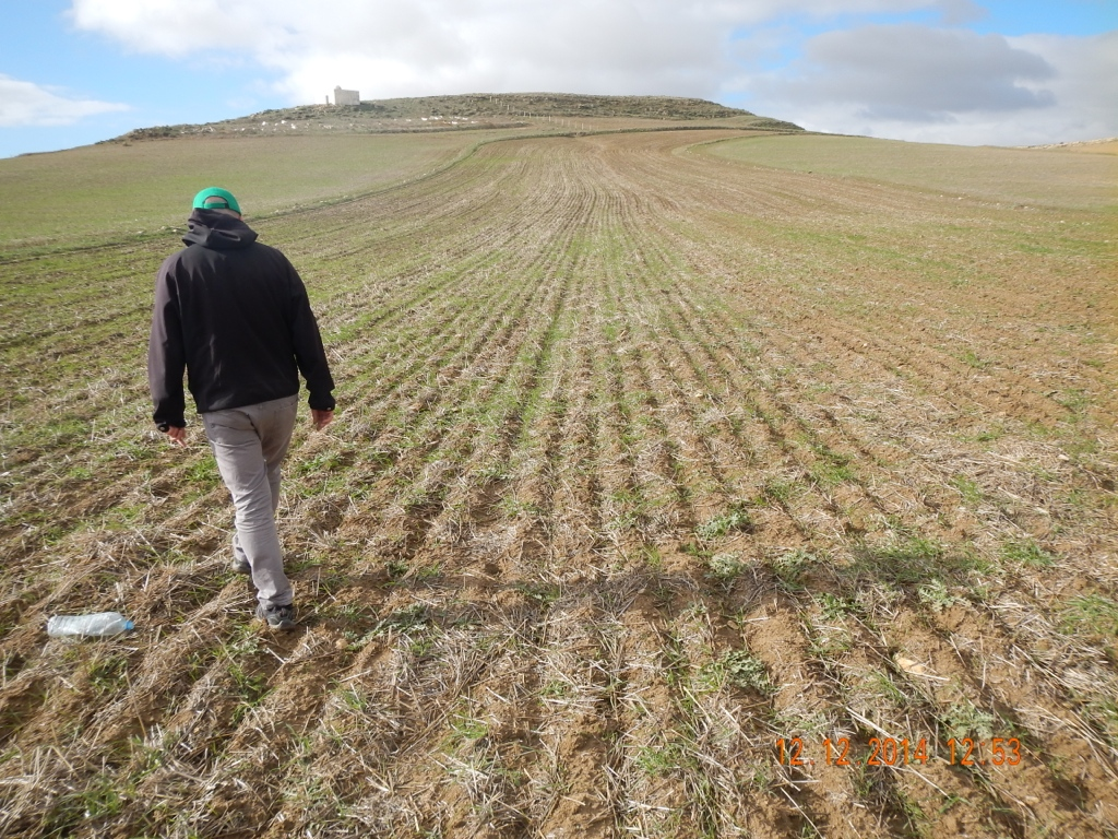 A typical residue levels in a recently seeded CA field. (Tunisia)